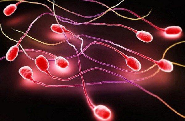 Tinh trùng màu hồng là bị gì bệnh gì?